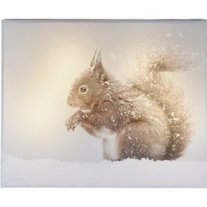 LED Obraz na plátně Animal and snow Squirrel, 20 x 25 cm